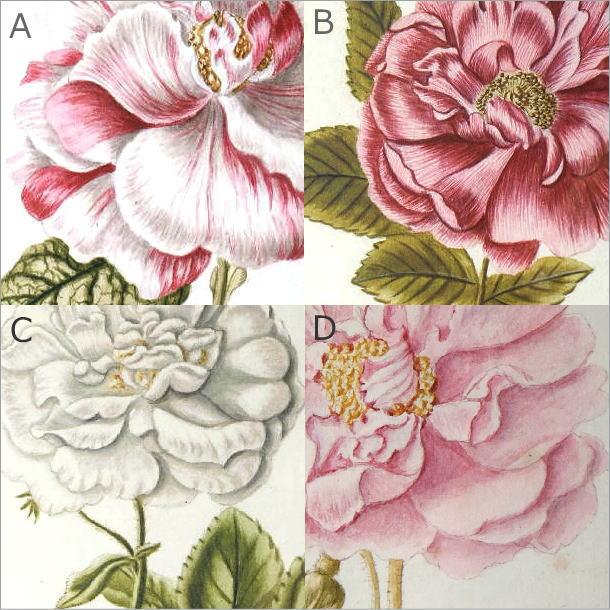 薔薇の花のレトロな額絵 4タイプ(5)