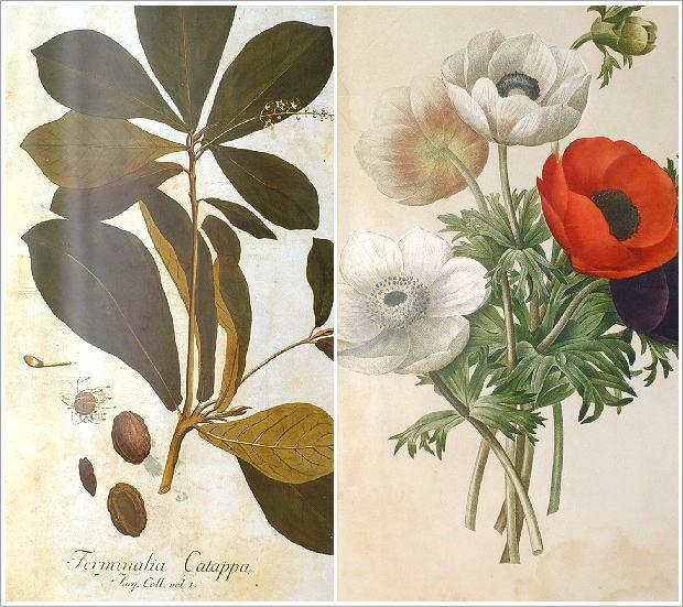 アンティークな植物画フレーム 2タイプ(2)