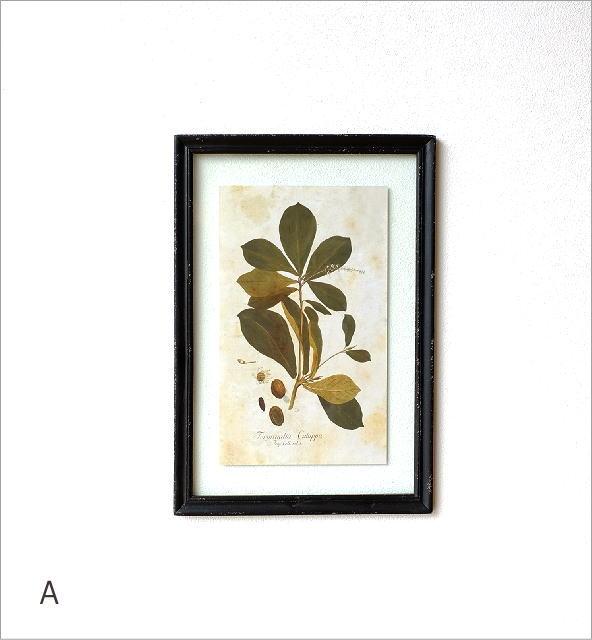 アンティークな植物画フレーム 2タイプ(5)