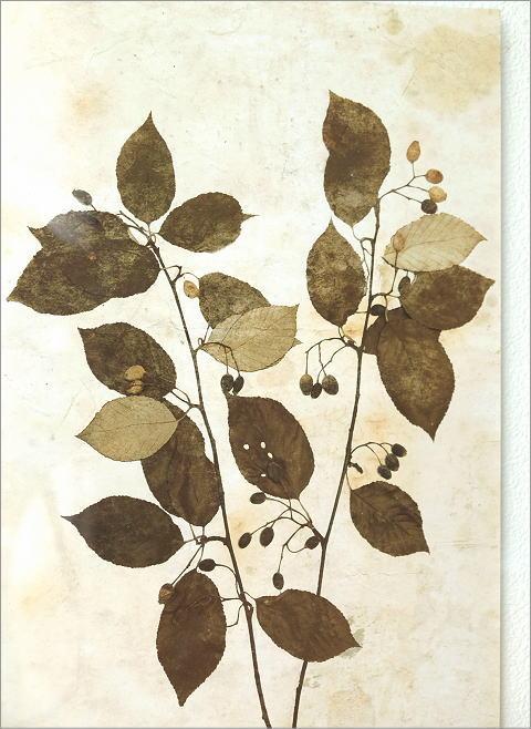 アンティークな植物画フレームB 2タイプ(2)
