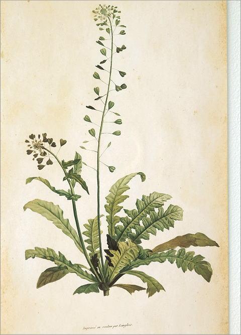 アンティークな植物画フレームB 2タイプ(3)