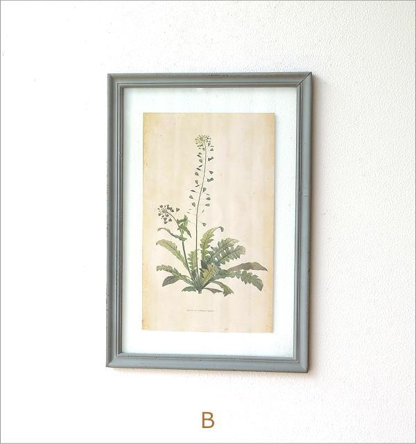 アンティークな植物画フレームB 2タイプ(7)