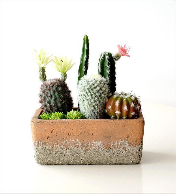 フェイクサボテンの寄せ植え レクトポット(4)